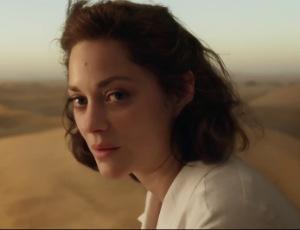 Brad Pitt i Angelina Jolie rozwodzą się przez Marion Cotillard?!